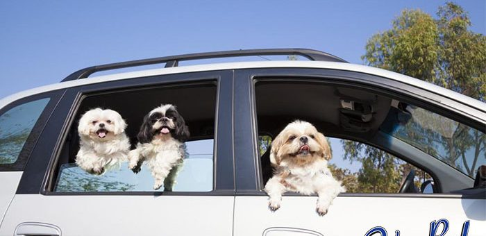 You Cannot Leave Your Pet Alone in the Car